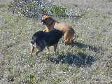 11.02.36dogs_play_detail
